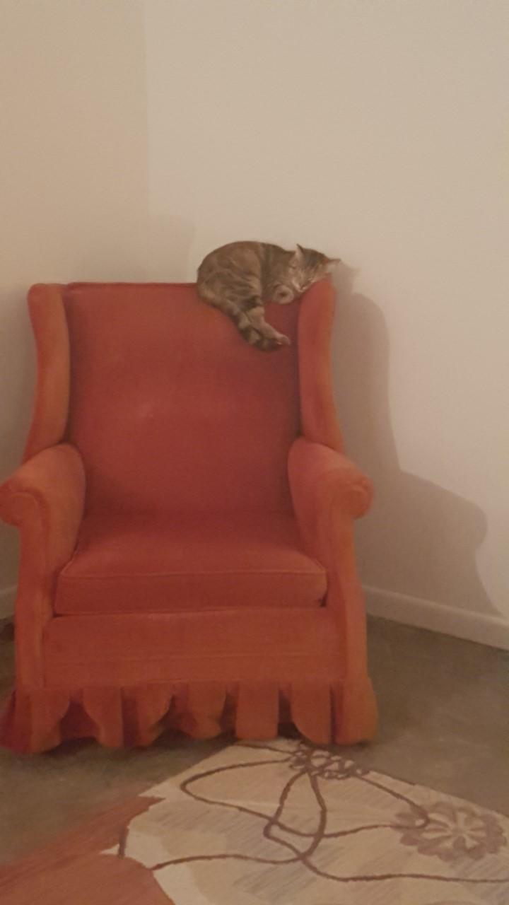 catfriend 1